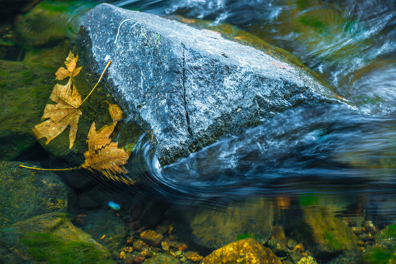 Rock Textures and Leaves in Yosemite National Park