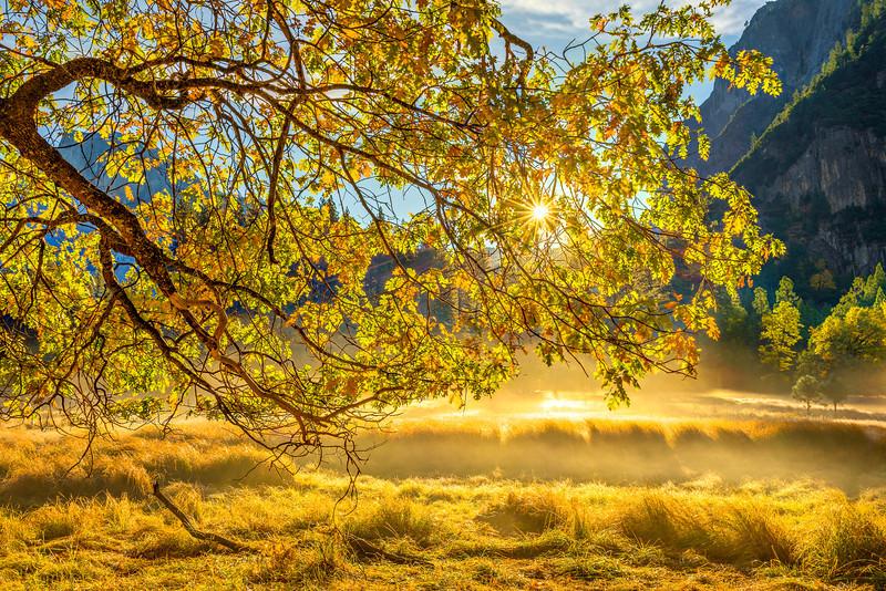 Mist in Cooks Meadow