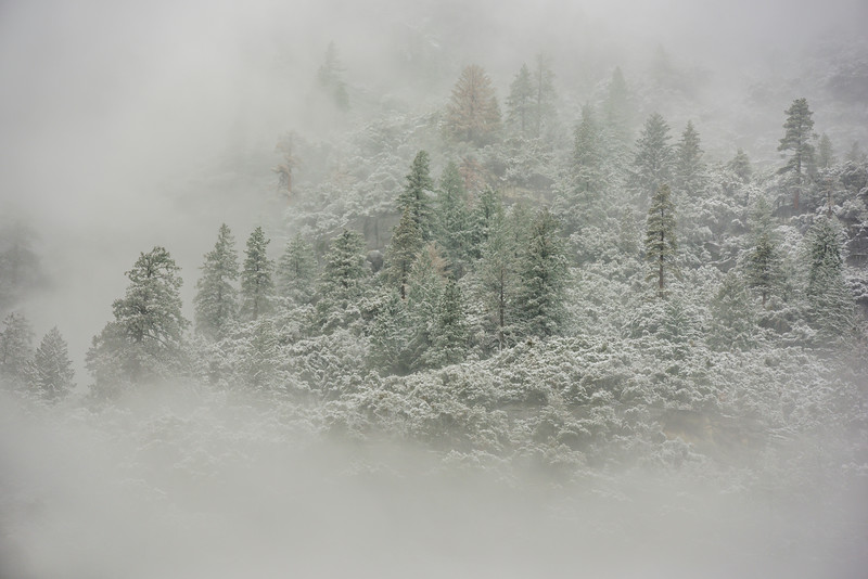"""Trees Appearing in the Snow"" in Yosemite National Park"