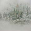 Trees Appearing in the Snow in Yosemite National Park