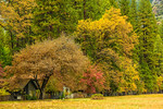 """Fall Color Scene in Yosemite National Park"""
