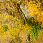 "Fall Colors on the Merced River in Yosemite.  I was shooting with retired Yosemite Park Ranger Mike Osbourne during an Ansel Adams workshop along the Merced river.  We stumbled across these vibrant Fall colors reflecting in the Merced.  Just a pleasing set of greens, yellows and Oranges with a Monet look on the water.   I could have just sat there all day.  9836   My facebook Fan Page is here: <a href=""http://www.facebook.com/pages/Yosemite-and-Bay-Area-Nature-Photography-by-John-Harrison/190152125697?ref=nf"">http://www.facebook.com/pages/Yosemite-and-Bay-Area-Nature-Photography-by-John-Harrison/190152125697?ref=nf</a>"