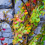"""Fall Colors at the Ahwahnee""  Yosemite National Park, California."