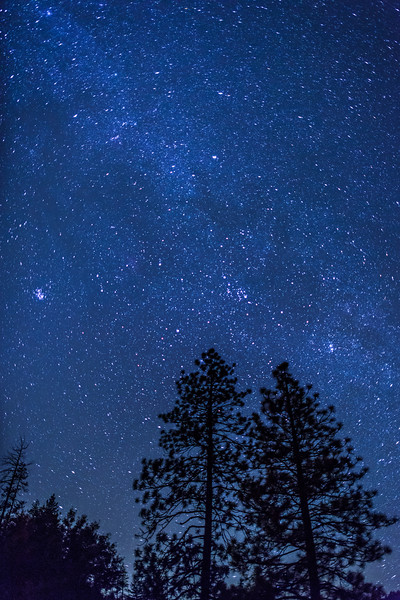 """Stars Above Yosemite Trees"" in Yosemite National Park."