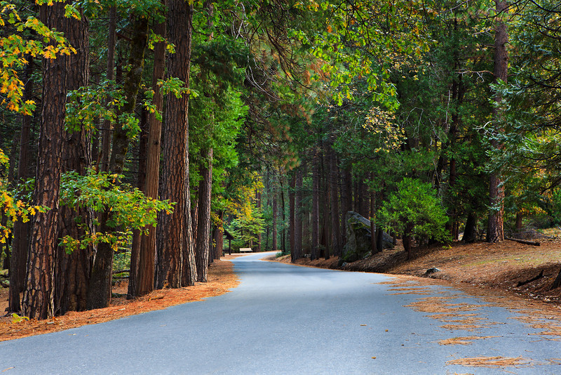 """""""Fall Walk in Yosemite National Park""""  The best part about visiting Yosemite National Park in the Fall is the lack of people!   This is the road to Mirror Lake near the bus stop in the morning and not a single person around!  Nothing better than Yosemite in the Fall and no one around!"""