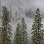 Yosemite-Pines-in-Winter-Granite-Fall-Colors-_D817916-Yosemite-National-Park-Fine-Art-Photography-Healthcare-Fine-Art