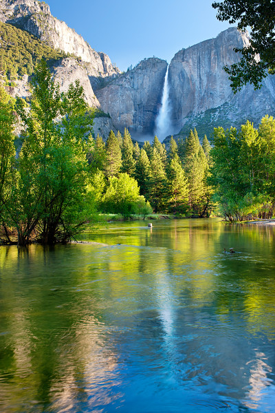 """Reflections of Yosemite Falls in the Merced"""