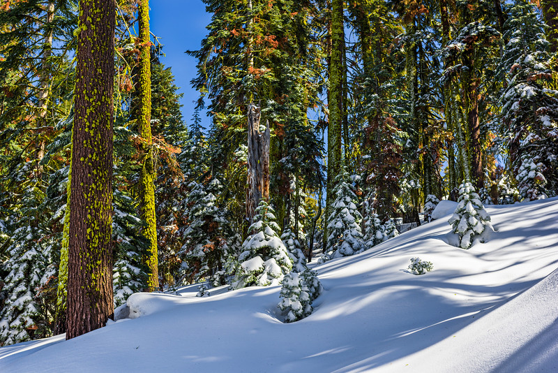 Winter-in-Yosemite-National-Park-Along-the-Glacier-Point-Road-Cross-Country-Skiing-Yosemite-National-Park-Fine-Art-Photography-Healthcare-Fine-Art_D812109