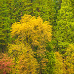 Fall_Colors-in-Yosemite-National-Park-California-Healthcare-Fine-Art-Photography-Collector_D817669