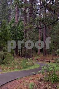 Walking Path, Yosemite Valley