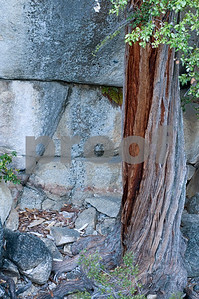 Twisted trunk and granite