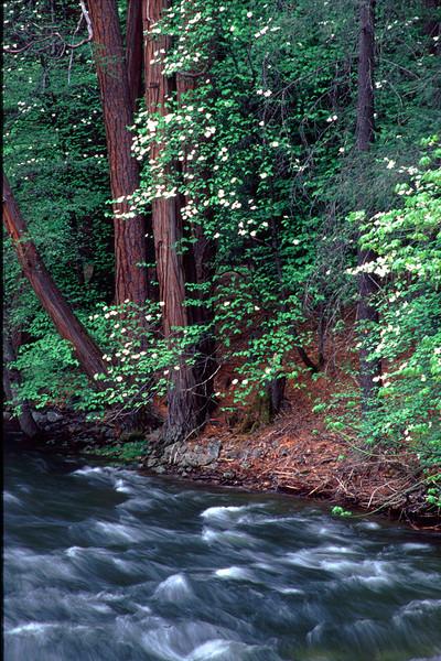 014dogwood, merced river