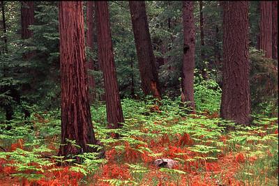 015Spring growth, Yosemite Valley