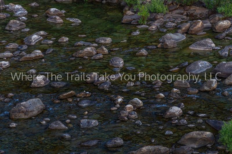 Blue Heron In The Merced River