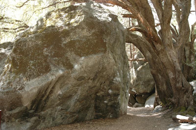 Yosemite-185