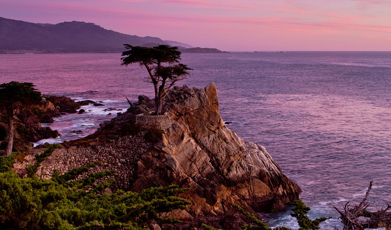 The Lone Cypress at Pebble Beach 17mile Drive.