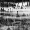 """Misty Fog in Yosemite Tree Tops"".  Fog forms over tree tops in Yosemite Valley, Yosemite National Park, CA."