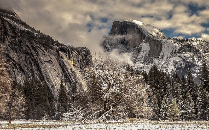 A view from the meadow in Yosemite.  Probably one of the most photographed trees in Yosemite.