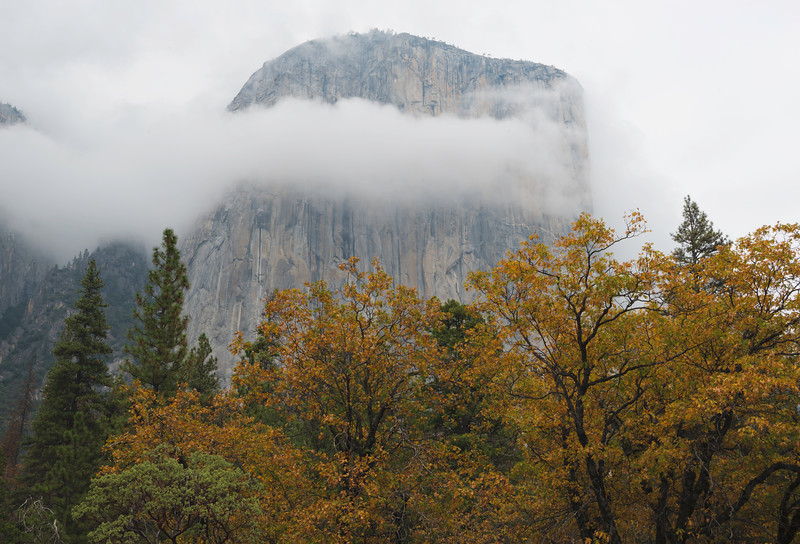 Fall color at El Capitan, Yosemite National Park