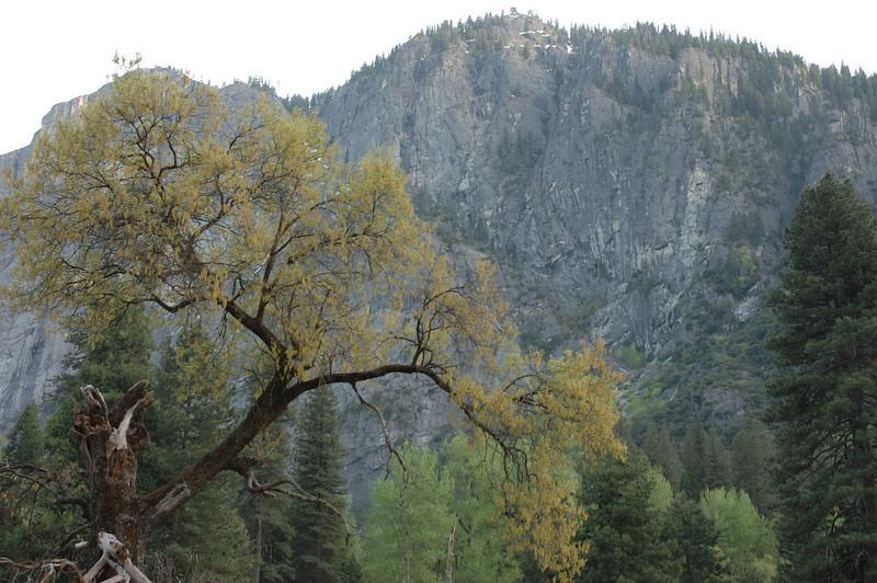 Yosemite-084