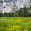Field Of Yellow Flowers - Yosemite National Park