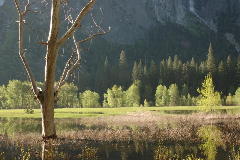 Yosemite-119
