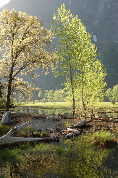 Yosemite-118