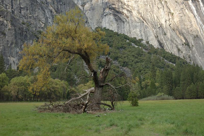 Yosemite-076