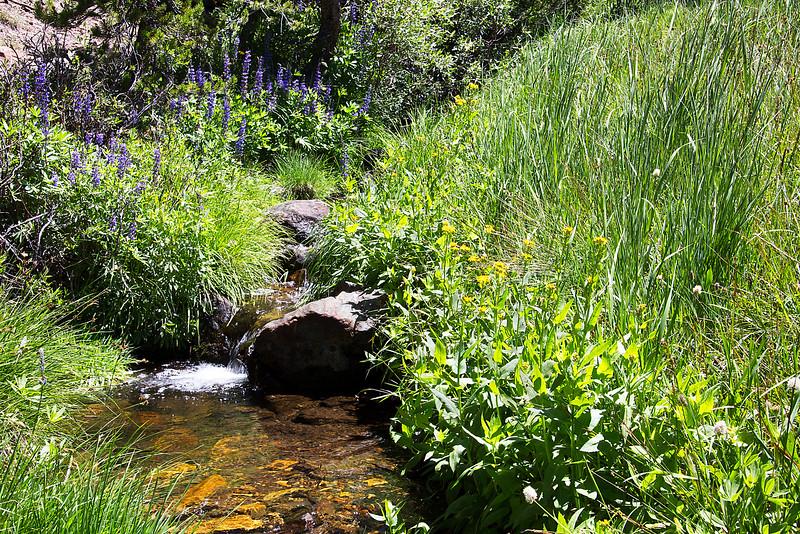 Stream Along Mono Pass Trail - Yosemite National Park