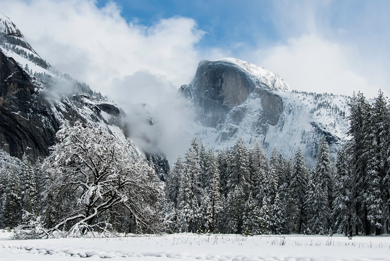 Half Dome and Tree in Snow