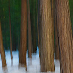 """""""Neill Trees""""  In honor of the photographer, William Neill, who shoots quite often in this style."""