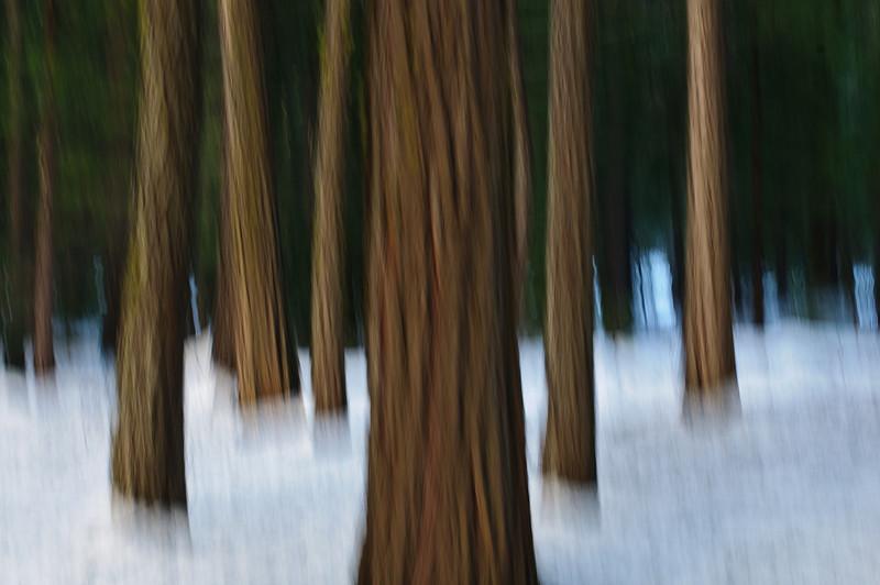 Yosemite National Park20090118-_D3X0717