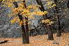 Fall Colors against Granite