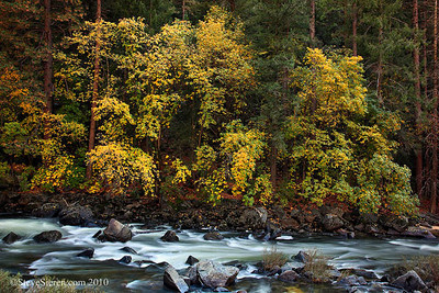 Maples along the Merced River Yosemite National Park