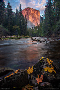 El Capitan catching it's alpen glow and reflecting in the Merced River during autumn in Yosemite Valley.