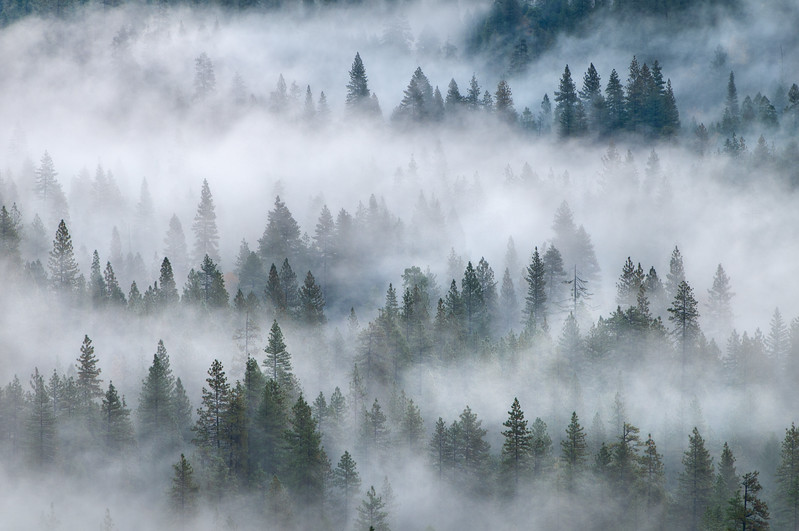 Rising out of the Mist