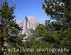Profile shot of Half Dome framed by Pine Trees taken from Galcier Point