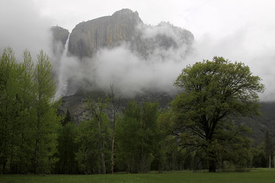 meadow, mist and yosemite falls