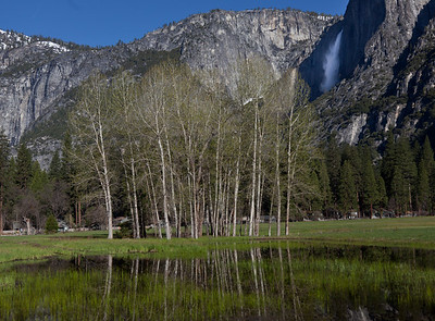 Cook's Meadow & Upper Yosemite Fall