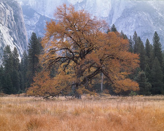Yosemite Fall Colors along the Merced
