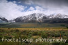 Dramatic Spring Meadow and Snow Covered Mountain Scene