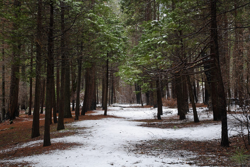 Path Through the Forest in Winter