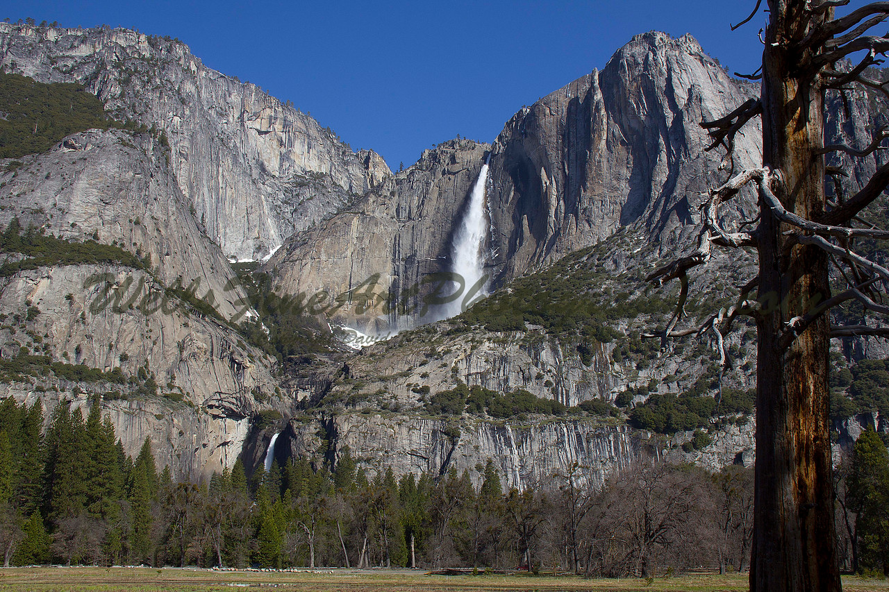 Yosemite Falls from Cook's Meadow with weathered tree