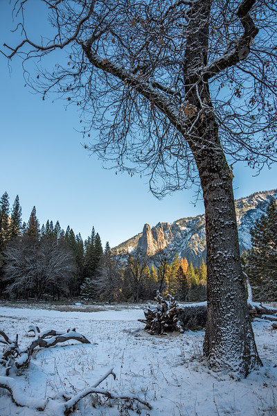 Cathedral Spires with large oak tree in snowy field at Yosemite National Park