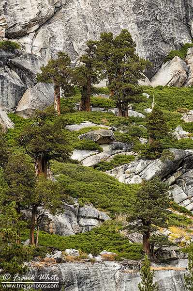 Trees on the moutainside