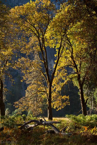 Backlit Tree in Cook's Meadow