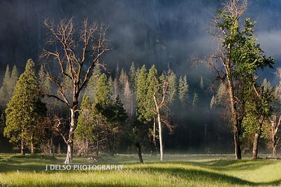 Yosemite-5551
