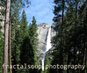 Valley view of Yosemite Falls through treelined path