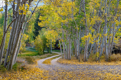 An Autumn corner