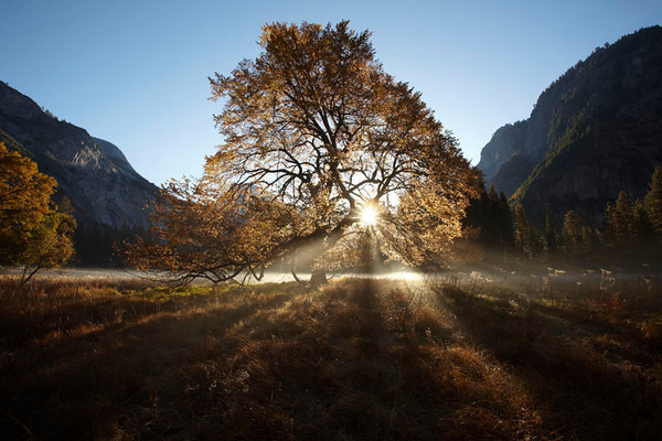 The Sun Rises over Half Dome and the famous Elm Tree in Cooks Meadow Yosemite National Park